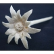 edelweiss made out of wood