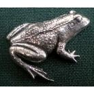 A14 Frosch