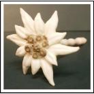 edelweiss made out of buckhorn