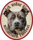 American Stafford Hund +