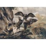 Adler gegen Gemse