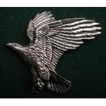 B14 eagle
