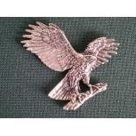 B37 eagle