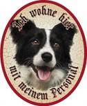 Border Collie Hund +
