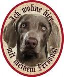 Hund 53 Weimaraner +