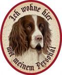 Hund 2 engl. Springer Spaniel +