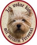 Hund 50 Norwich Terrier +
