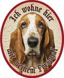 Basset Hund +