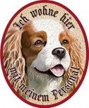 Cavalier Spaniel Hund +