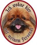 Pekinese Hund +