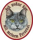 Katze Bluepoint +